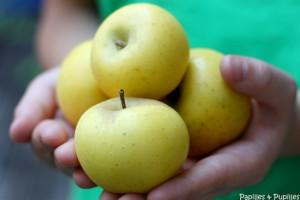 Pommes-reinettes-dorées